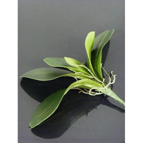 Liść do storczyka 28cm la410 green