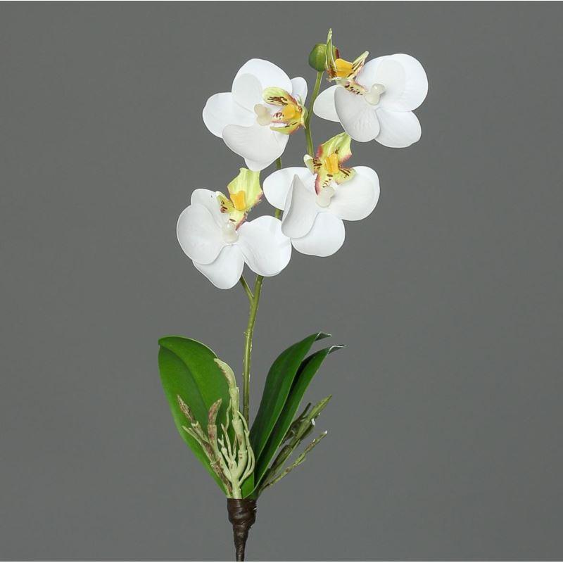 mini orchid phalaenopsis, 26 cm, white-green saili