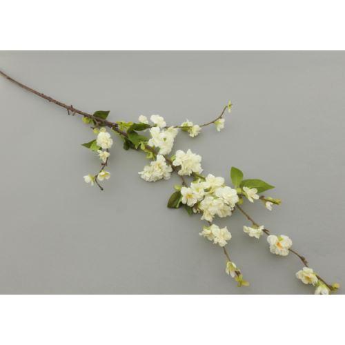Kwitnąca wiśnia cherry blossom 118  white