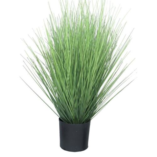 Trawa King festuca green in pot 60cm