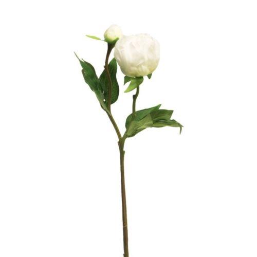 Peonia Jupiter white 45cm