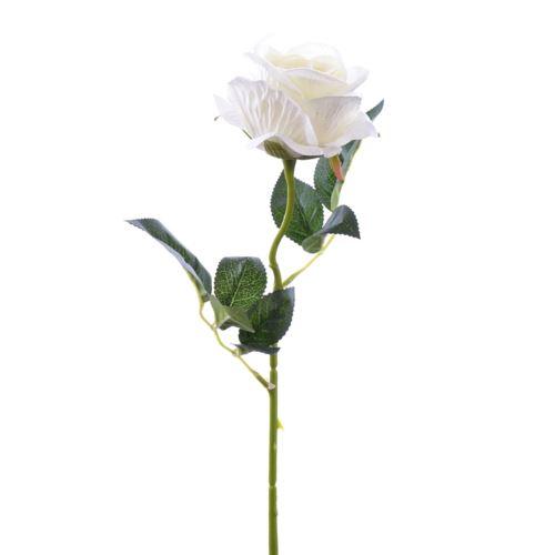 Róża poj velvet /T04  35Cream