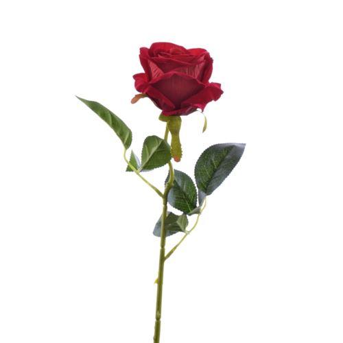 Róża poj velvet /T04  1Red
