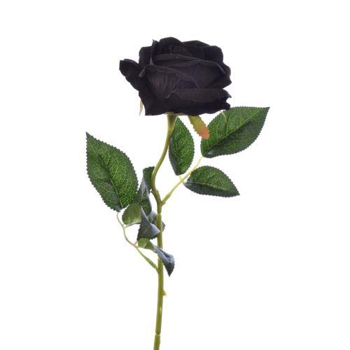Róża poj velvet /T04  Black