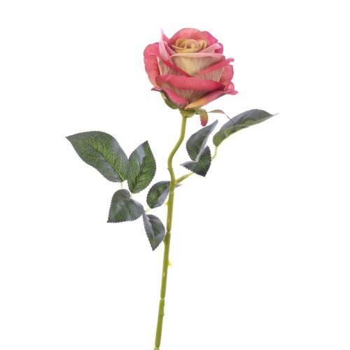 Róża poj velvet /T04  Old Pink