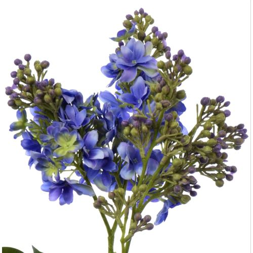 Bez x2 72cm sun301 blue