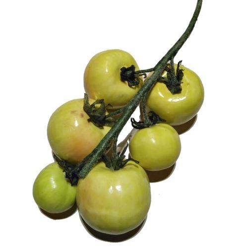 Pomidory gałązka green Z-11