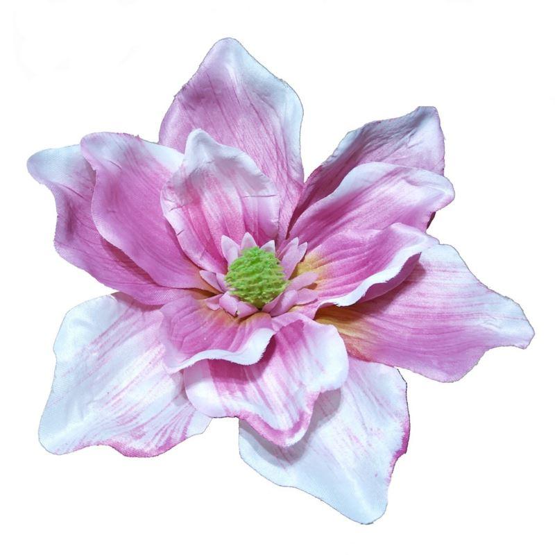 Magnolia główka Z-2,5