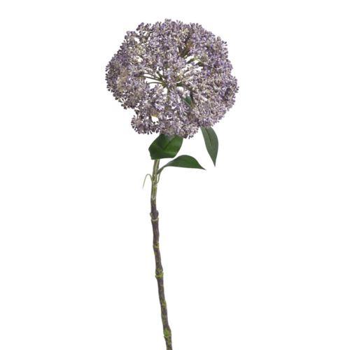 Czosnek duzy 55cm purple