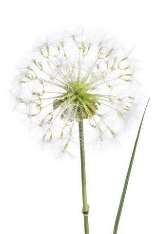 TRAWA - DMUCHAWIEC 100CM WHITE  GREEN