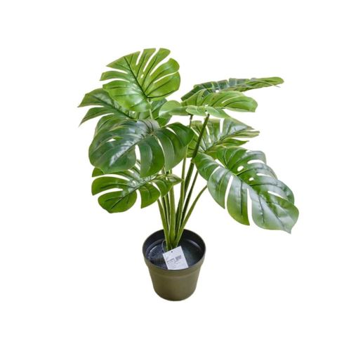 MONSTERA W DONICZCE 60 CM GREEN