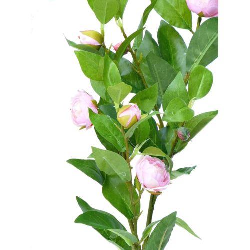 Róża gałązka
