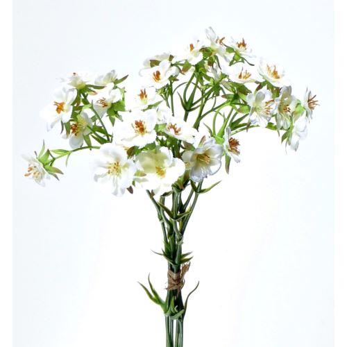 Dziwaczek Wiązany MIRABILIS SUN519 white