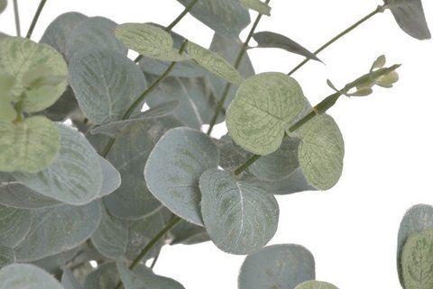 Bukiet eukaliptus x16 50cm