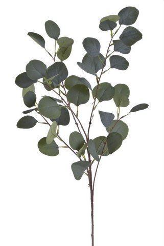 Galazka eukaliptusa -sztucz.rosl.