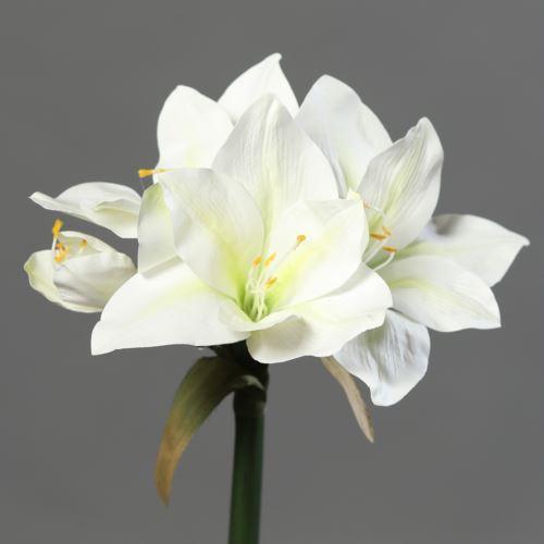 Amaryllis with 3 flowers 56 cm cream