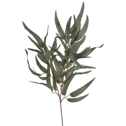 Galazka liscie eukaliptusa POWDER