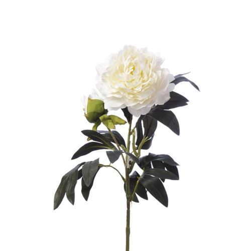 SINGLE PEONIA 94CM CV11637 CREAM WHITE