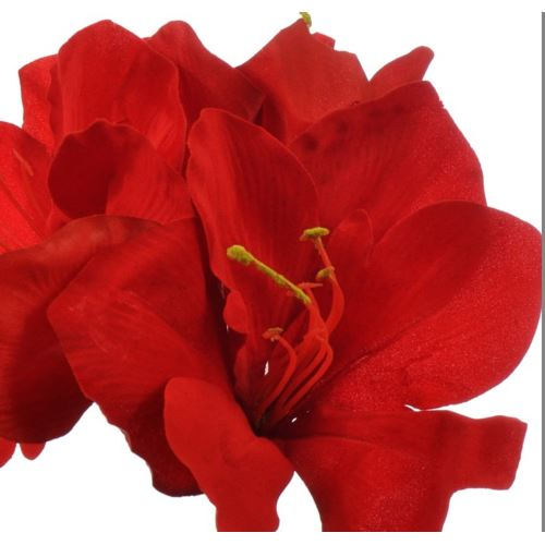Amaryllis pick x3 velvet 30 cm red