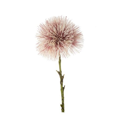 Allium ball  spider – czosnek 48cm pink