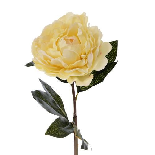 Peonia poj.  natural touch 68cm cream/green