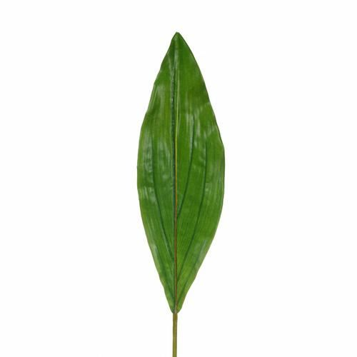 Aspidistra liść natural touch 73cm green
