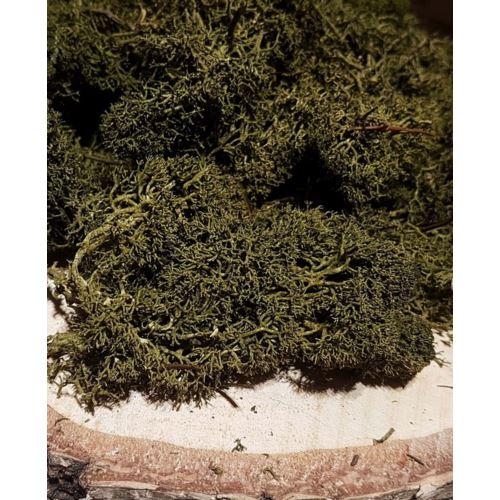 MECH CHROBOTEK - ISLANDMOSS 200G  LEAF GREEN