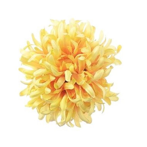 Chryzantema BALL ART100 3 YELLOW