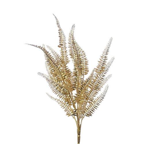 Paproć ozdobna złota 60cm