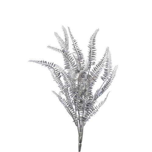 Paproć ozdobna srebrna 60cm