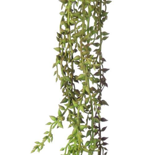 Tilancja zwisająca starzec - senecio 60cm zielone