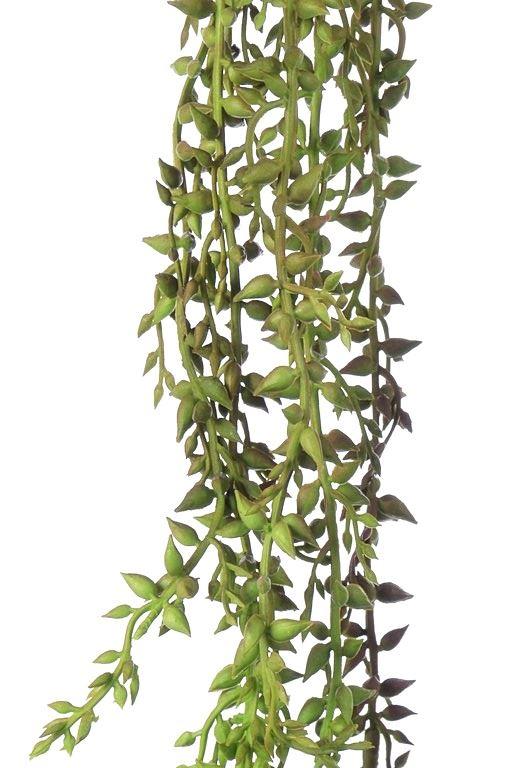 Trawa ozdobna pnącza zielone 60cm