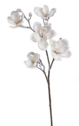 Galazka magnolii 92cm