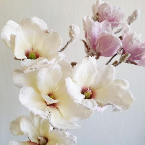 Galazka magnolii 92cm kremowy Ośnieżony