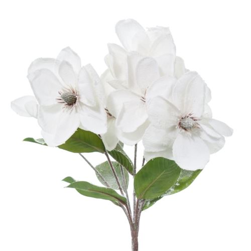 BUSH MAGNOLIA INNEVATA x 7 CM.54 WHITE CREAM