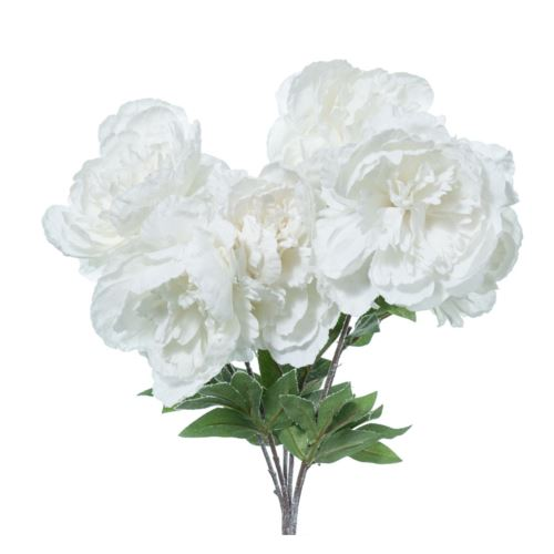 BUSH PEONIE INNEVATE x 6 CM.47 WHITE CREAM