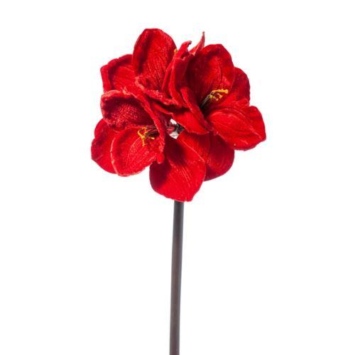 AMARYLLIS x 3 DELUXE VELVET CM.75 RED