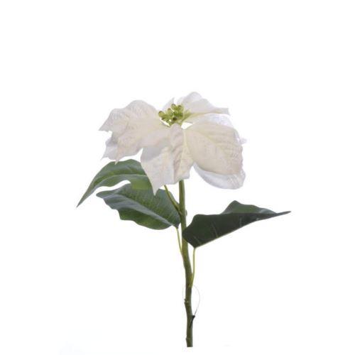Poinsecja pojedyncza 75cm sun673 white