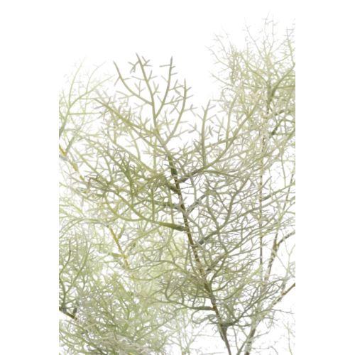 Asparagus pierzasty 95cm xliu027 powder lt green