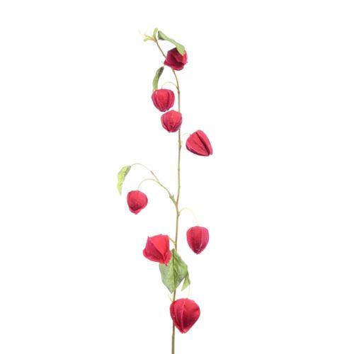 Miechunka czerwona na lodydze 90cm red