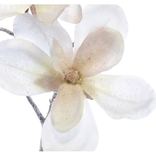 Magnolia szron 55cm white