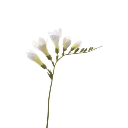FRESSIA SUN328 WHITE 699