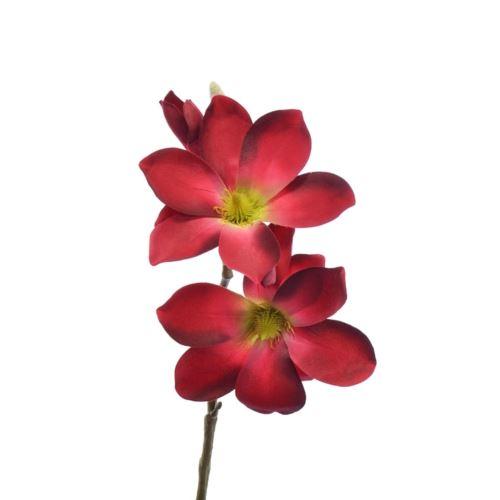 Gałązka magnolia SUN488 DR. BEAUTY