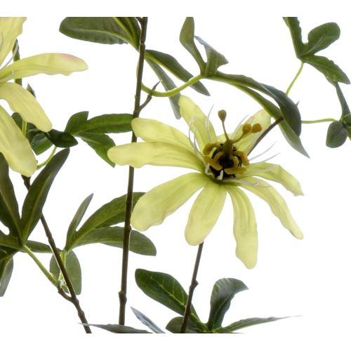 Passiflora 90cm aj68172 lt green
