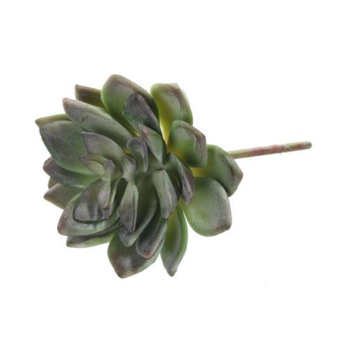 Sukulent na łodydze 12 cm dk green