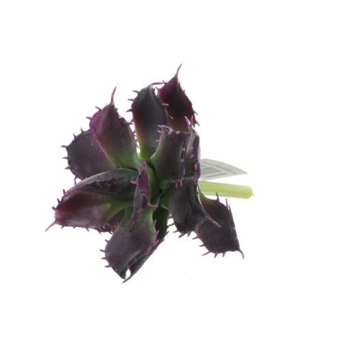 Sukulent na łodydze 12cm purple green