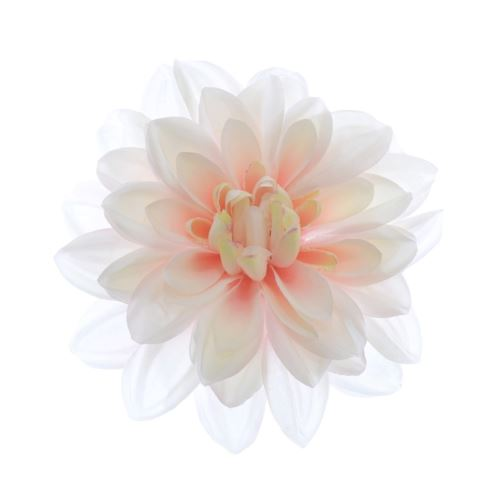 Dahlia dalia head zq011 14cm cream lt pink