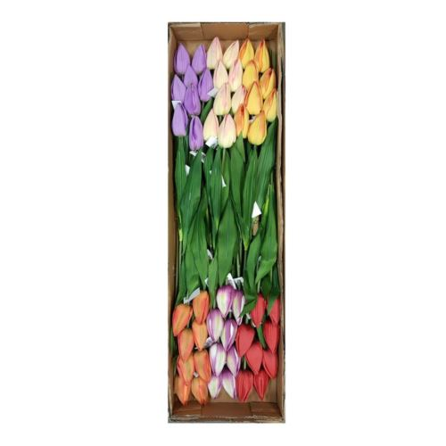 Tulipan poj. 56cm /1164 asst mi12 48szt/karton