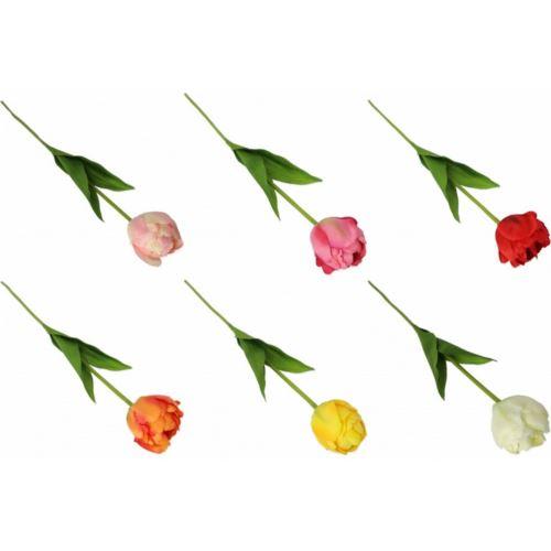 Tulipan pojedynczy 60cm  48szt/karton mix3