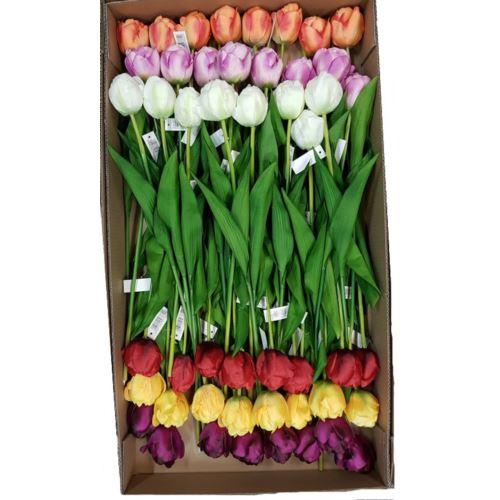 Tulipan pojedynczy 60cm  48szt/karton mix2